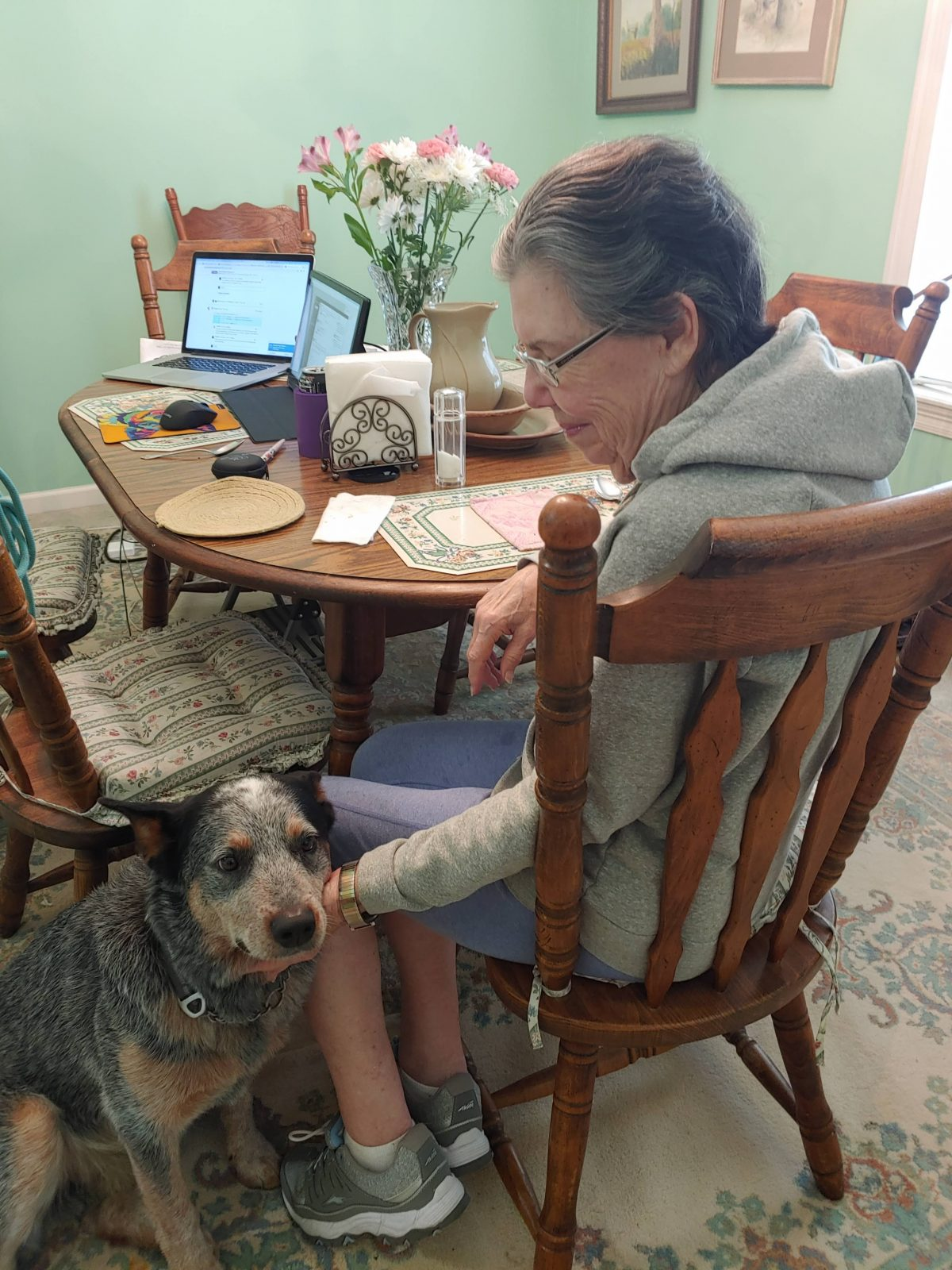 Blue Cattle Dog is petted by senior woman siting at a dining table